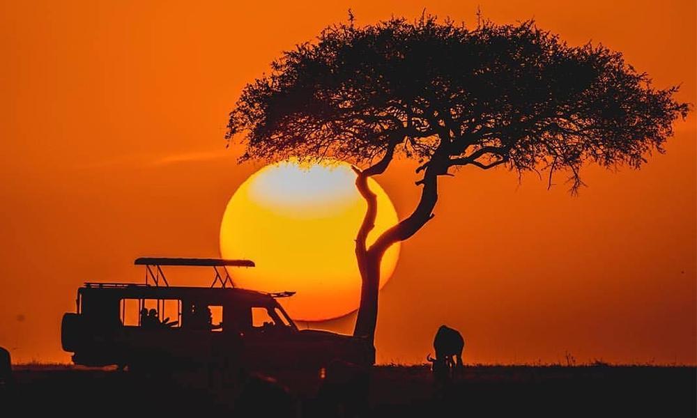 On The Wild Side: Kenyan Safari Escapades